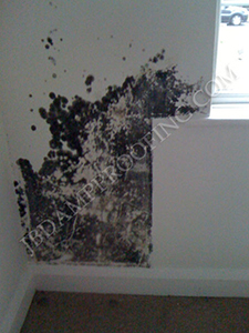 Mould growth on wall - condensation